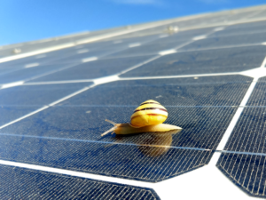Spring cleaning your house? Don't forget your solar panels!